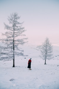woman standing between two white pine trees at daytime