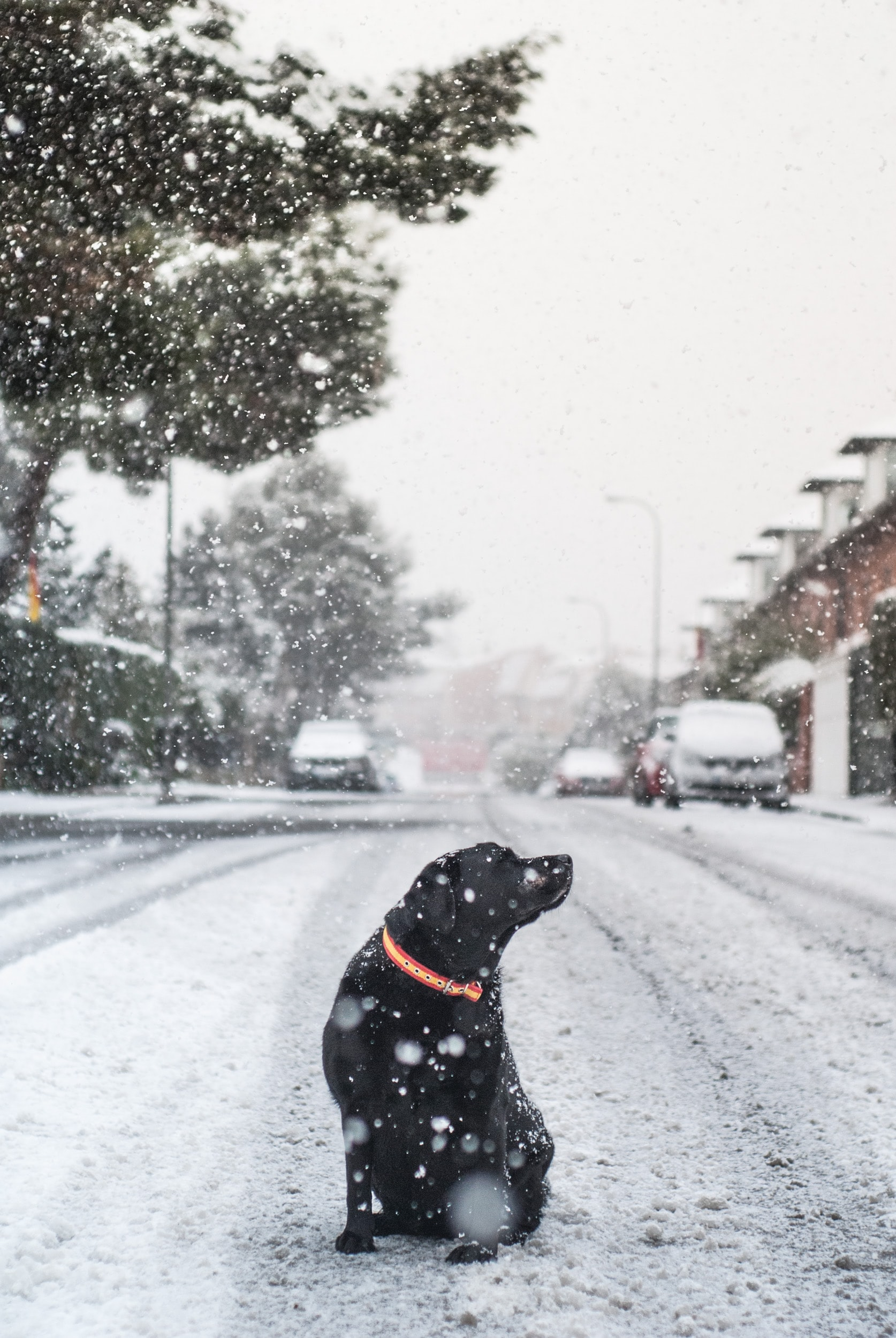 adult short-coated black dog in middle of road with snow during daytime