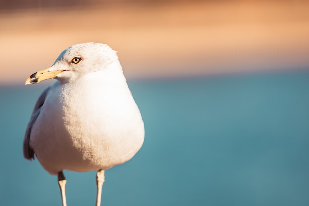 rule of thirds photography of white bird