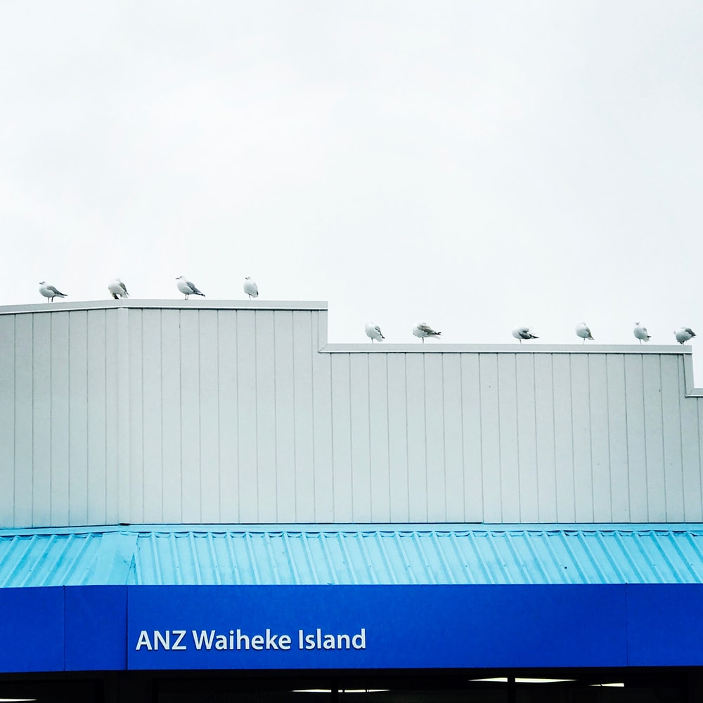 flock of white-and-gray birds perching on building