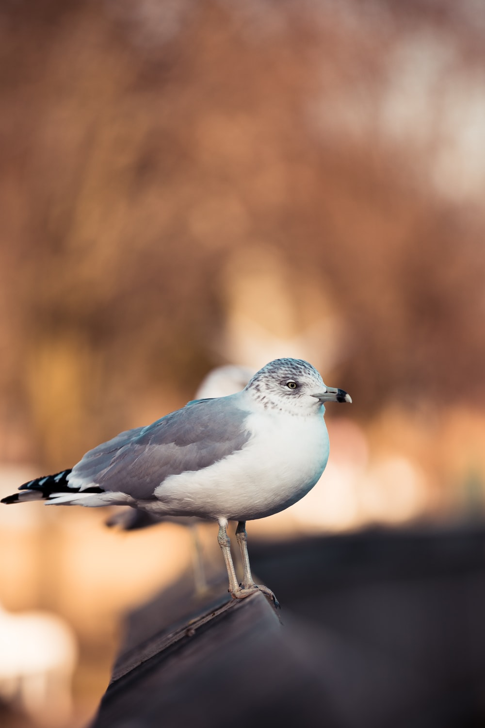 selective focus photography of white and gray gull