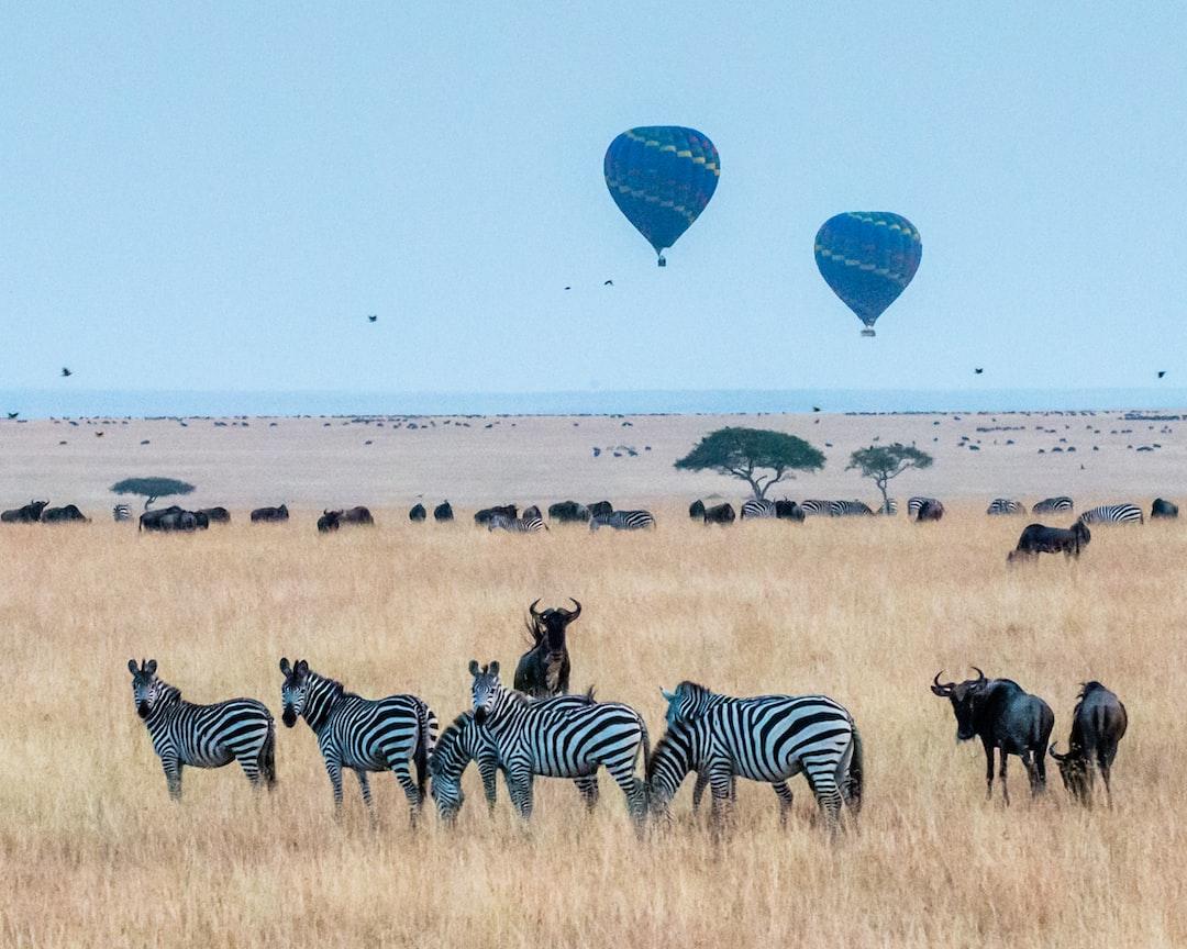 Early morning hot air ballooning over Maasai Mara.
