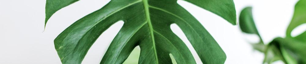 BabyXrp header image