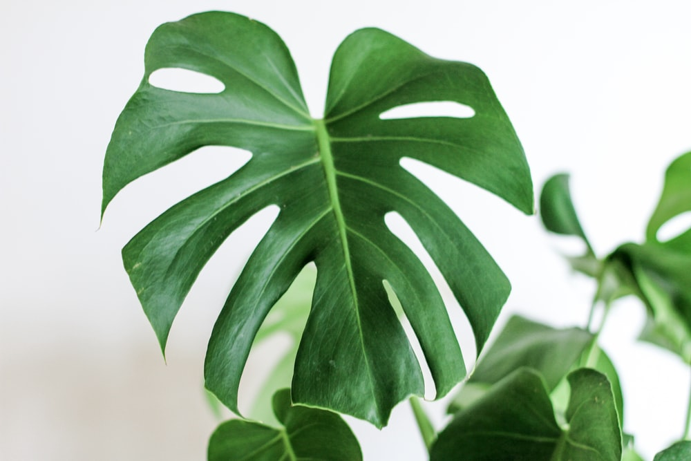 gree leafed plant in focus photography