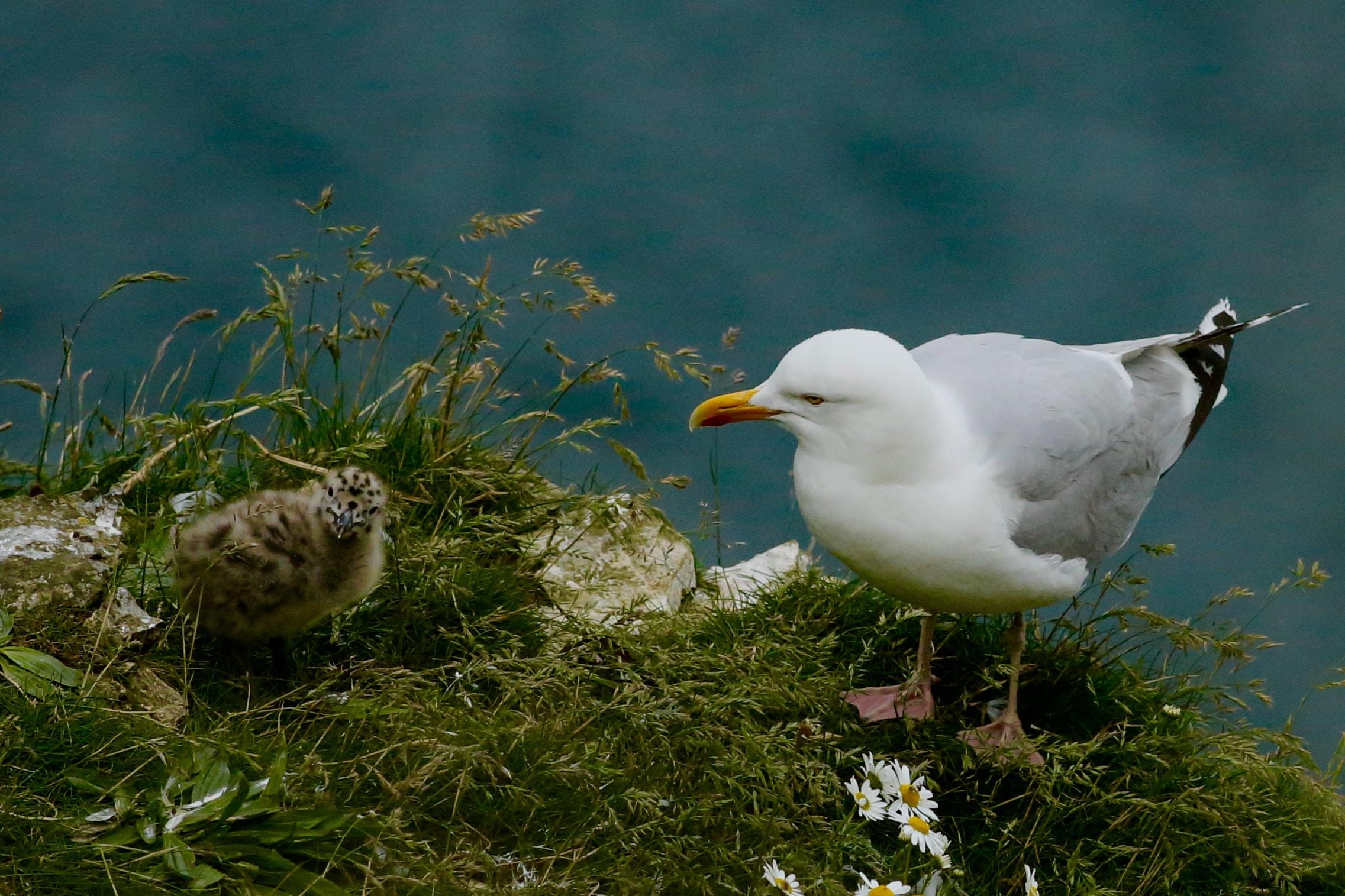 seagull on grass field