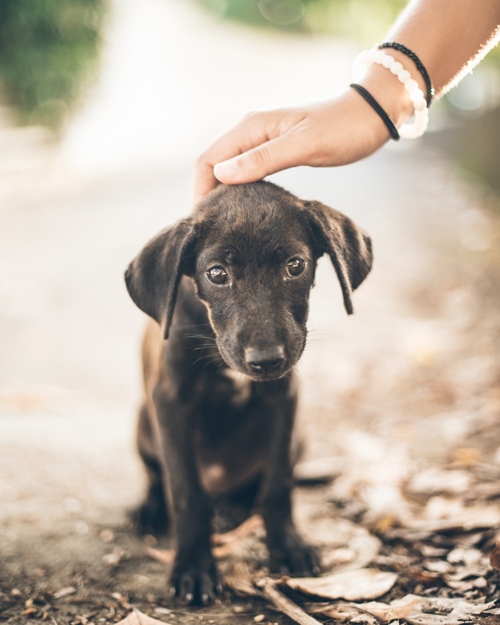 woman holding black puppy's head