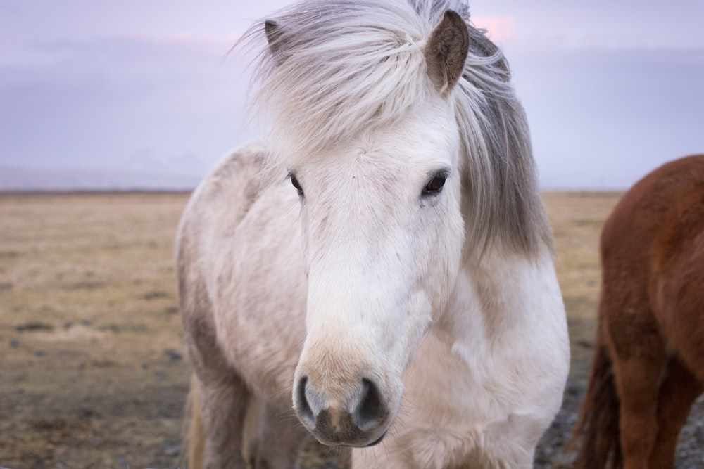 closeup photo of white horse