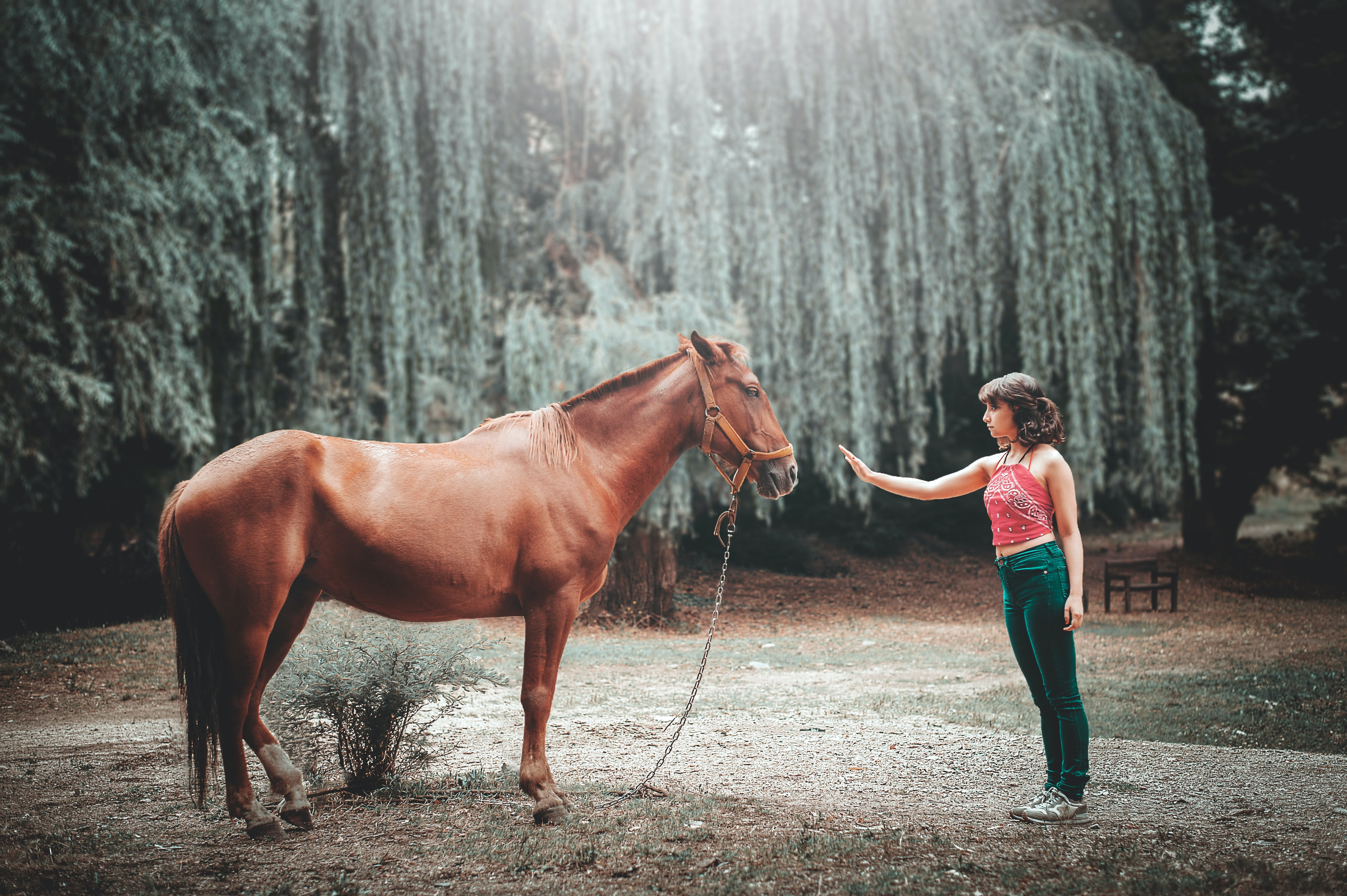 woman attempting to touch horse's face under tall tree during daytime