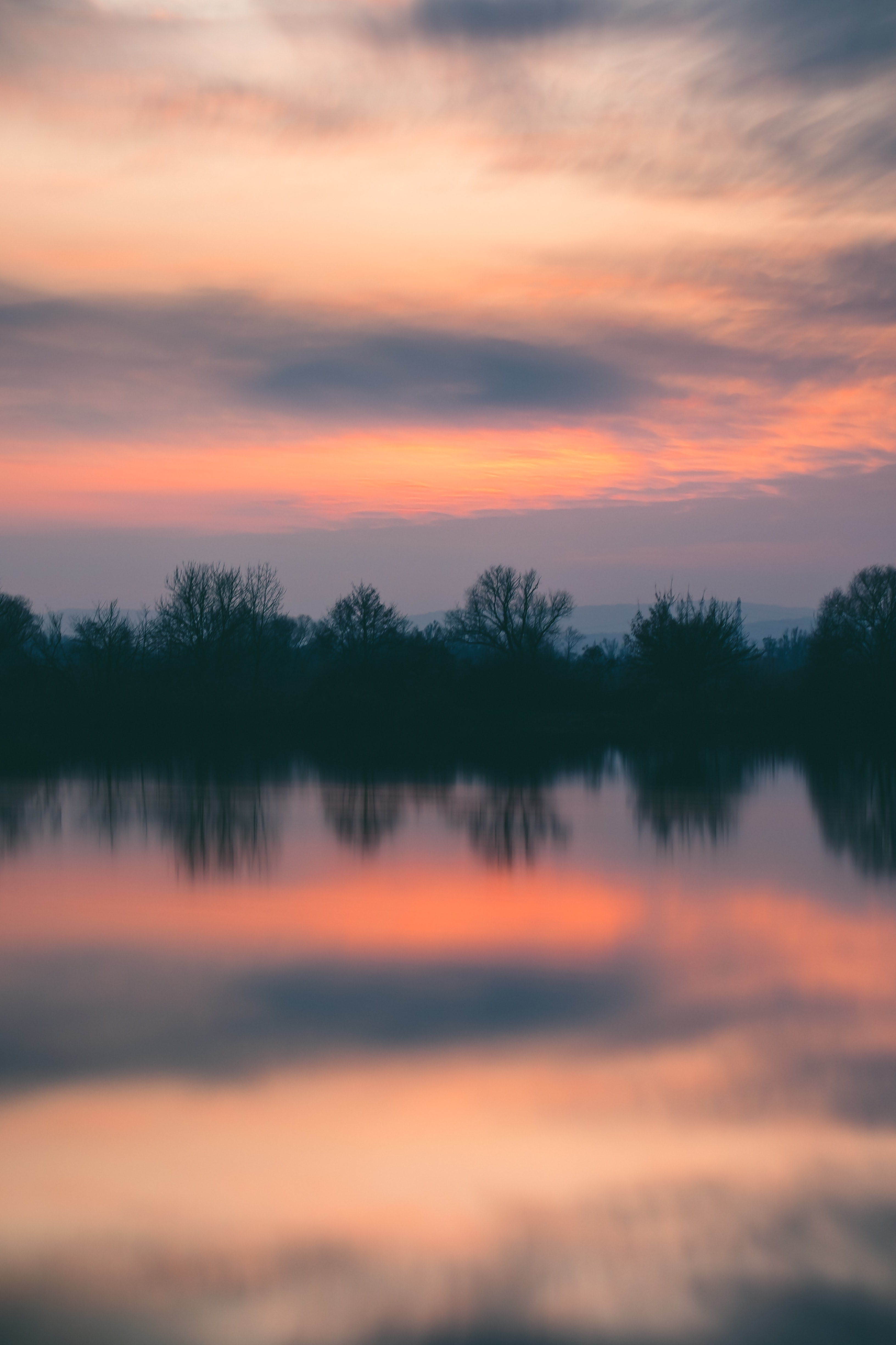 silhouette of trees near in the river