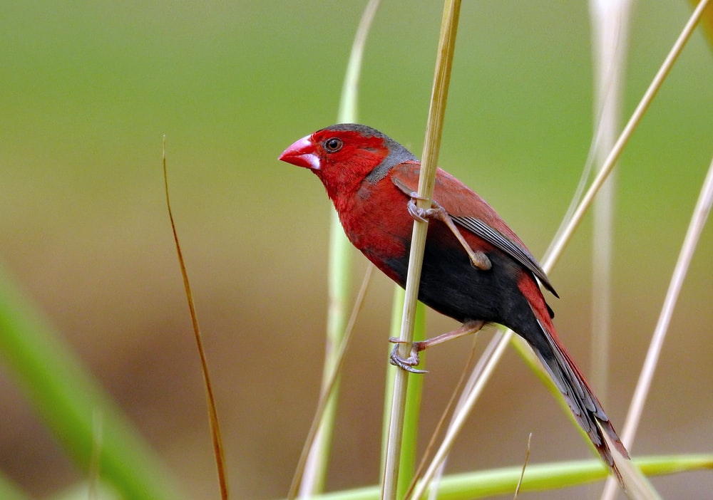 red and black bird on plant branch