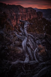 selective focus photograph of roots