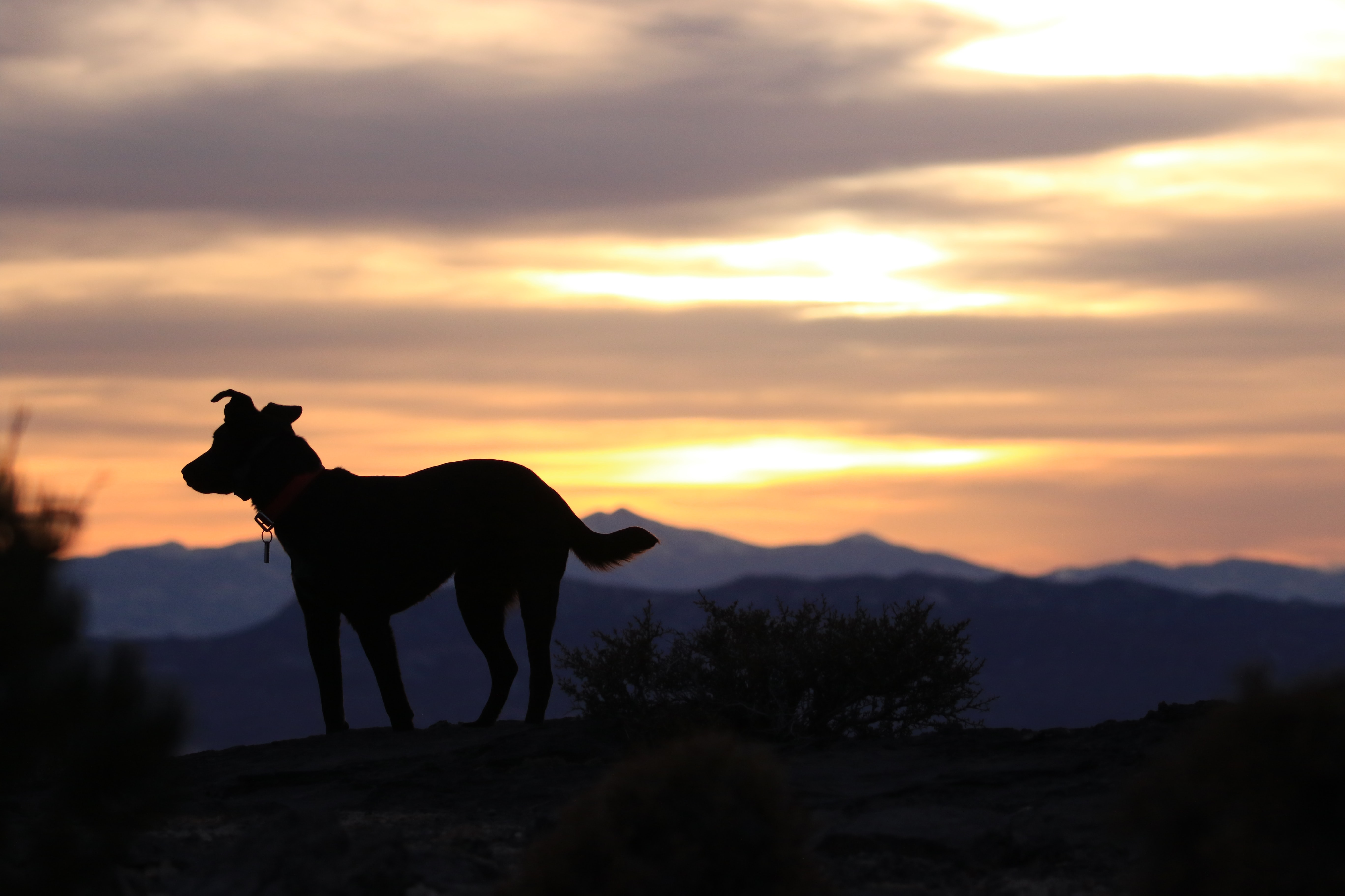 silhouette photo of dog on hilltop during sunset