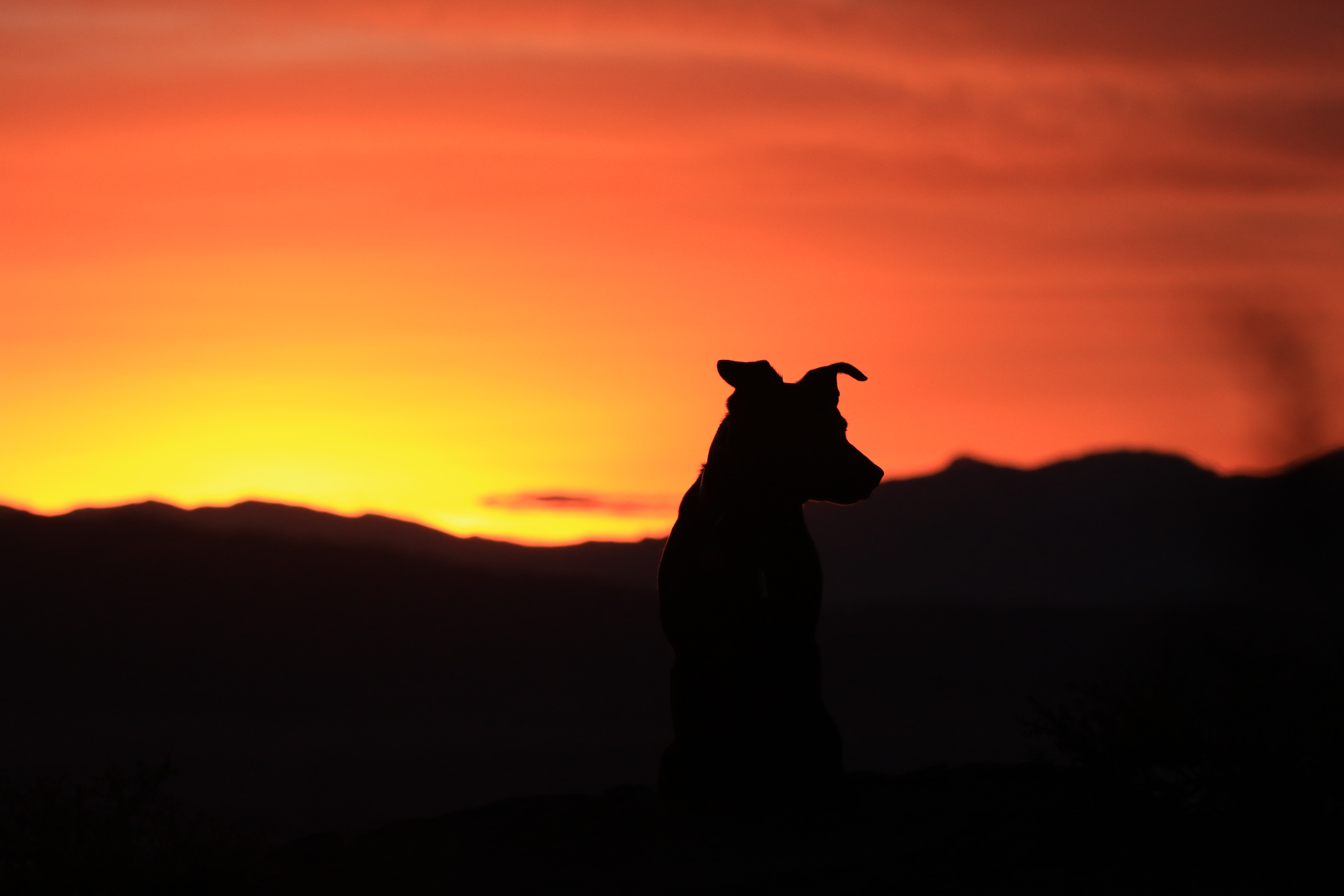 silhouette of standing dog looking at mountain during sunset