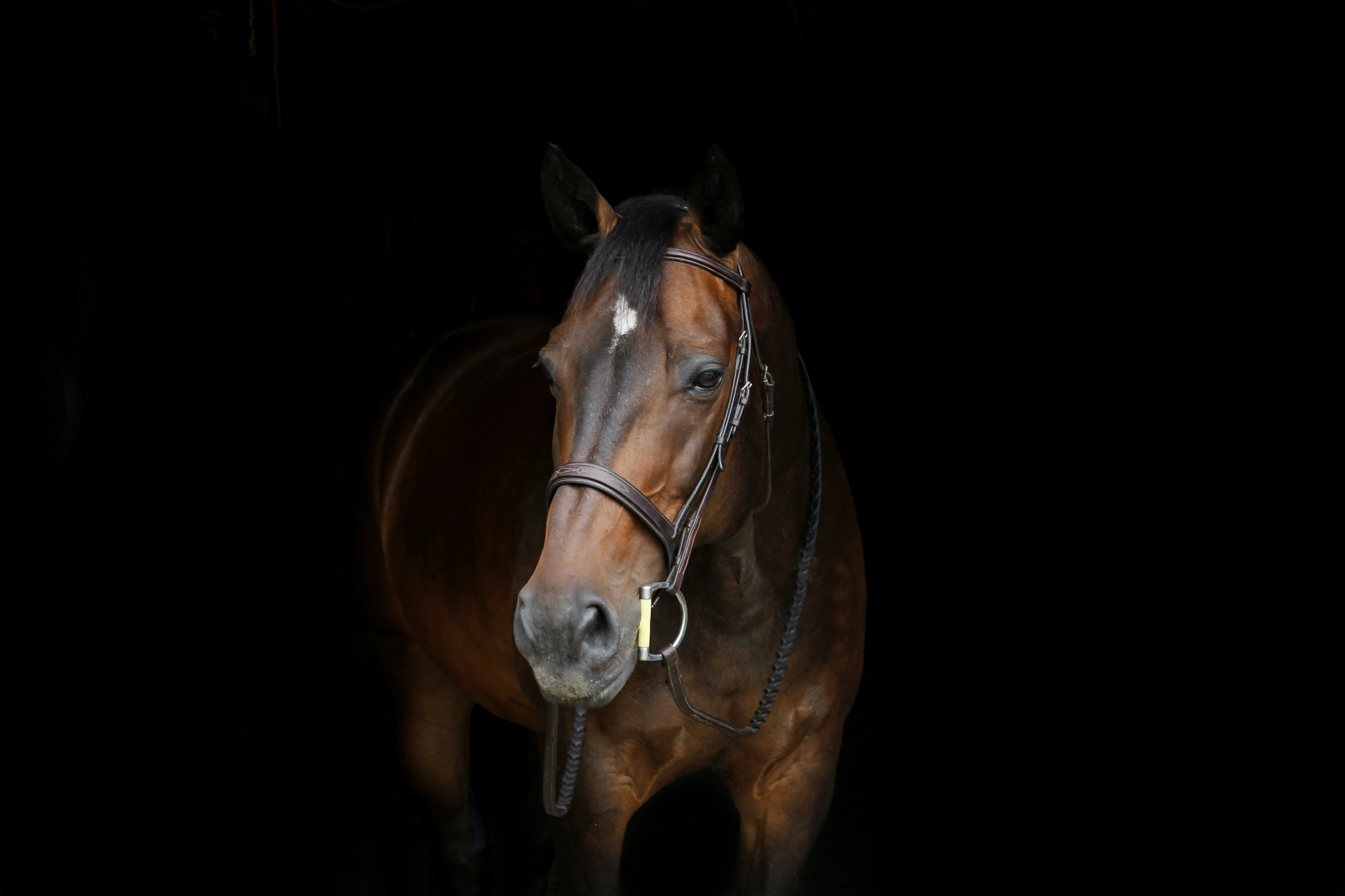 brown horse with white spot on forehead