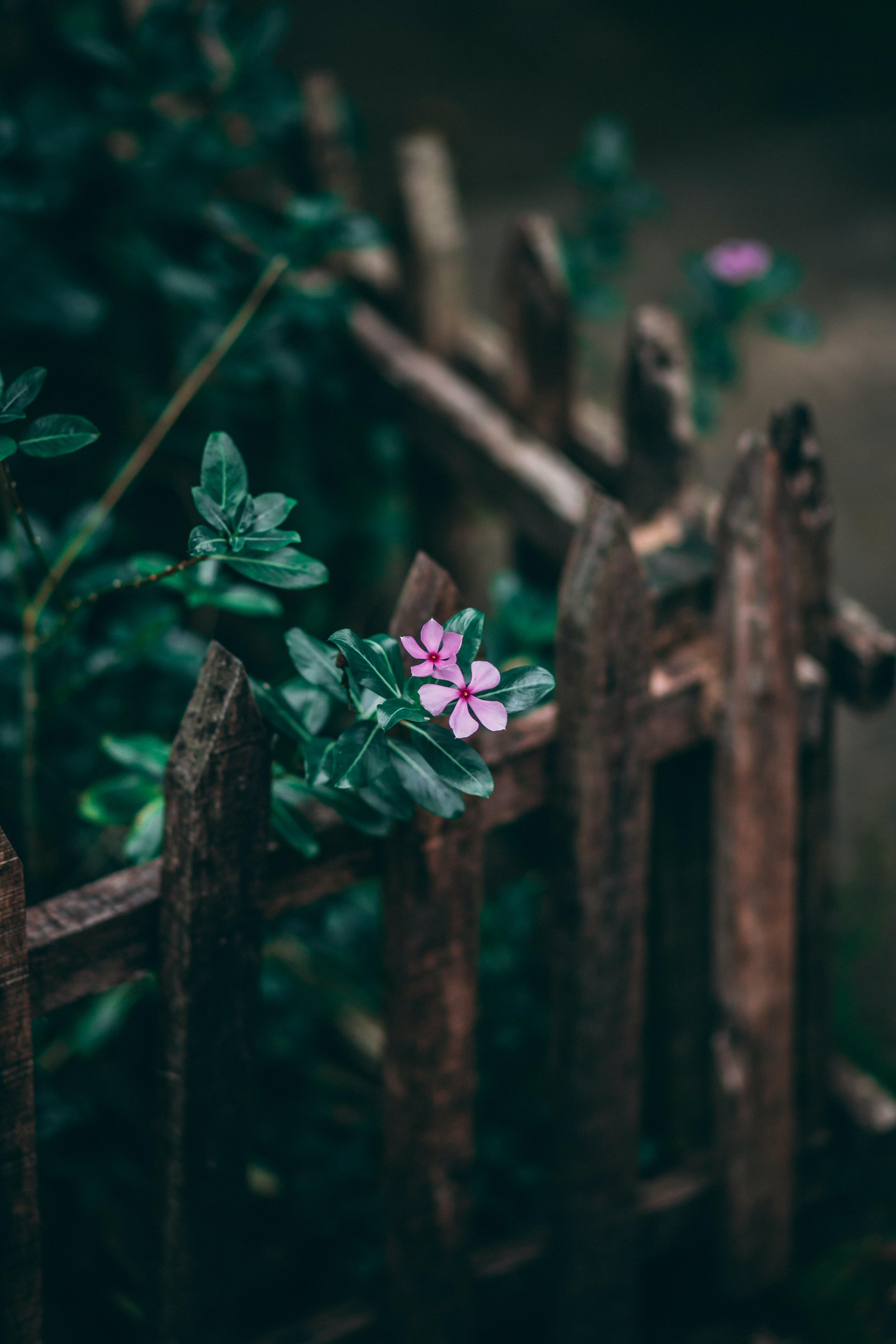 shallow focus of pink petal flower