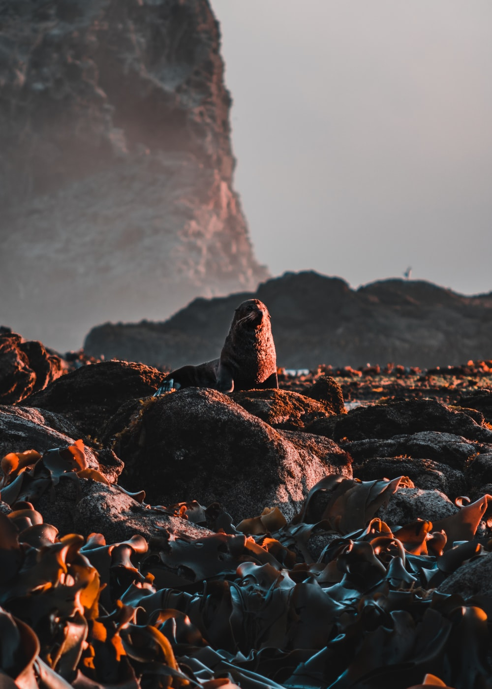 sealion surrounded by rocks during daytime