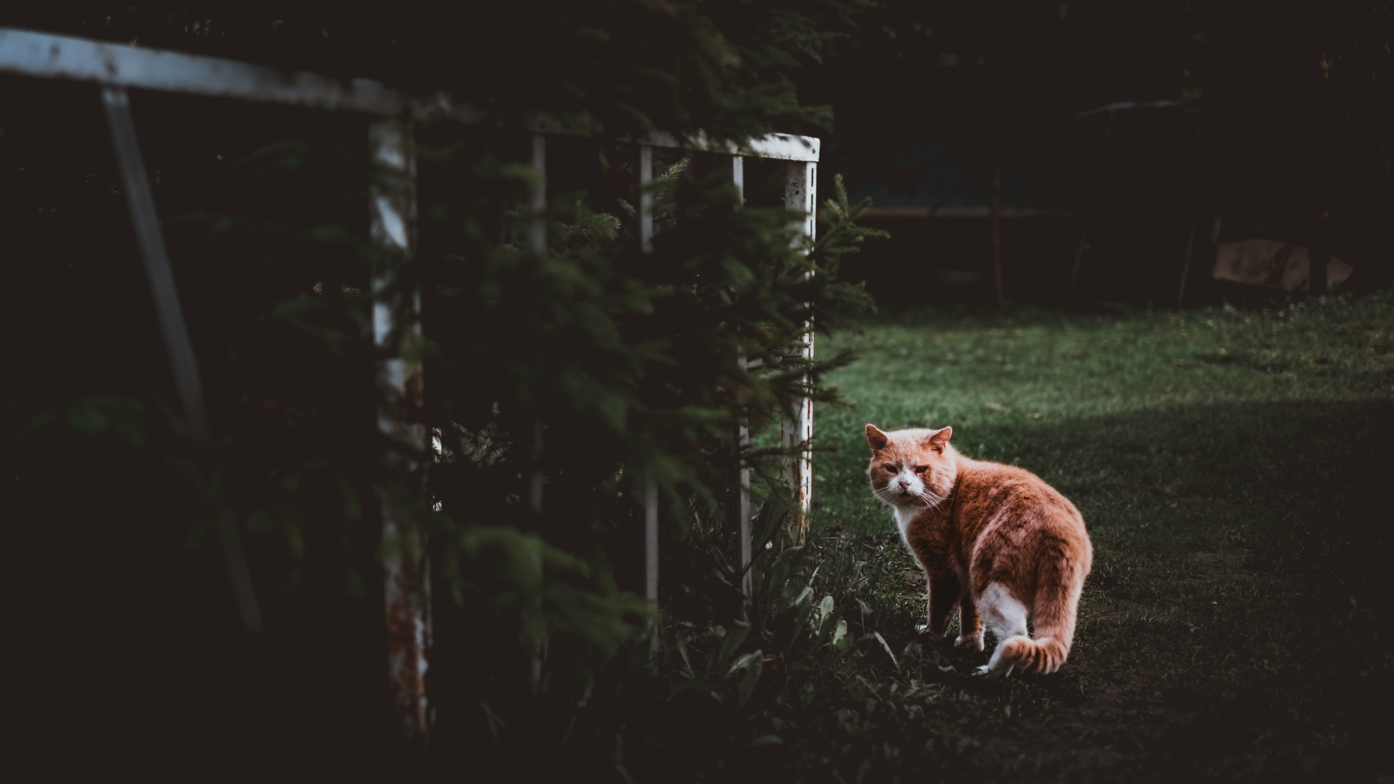 brown and white cat standing on green grass field