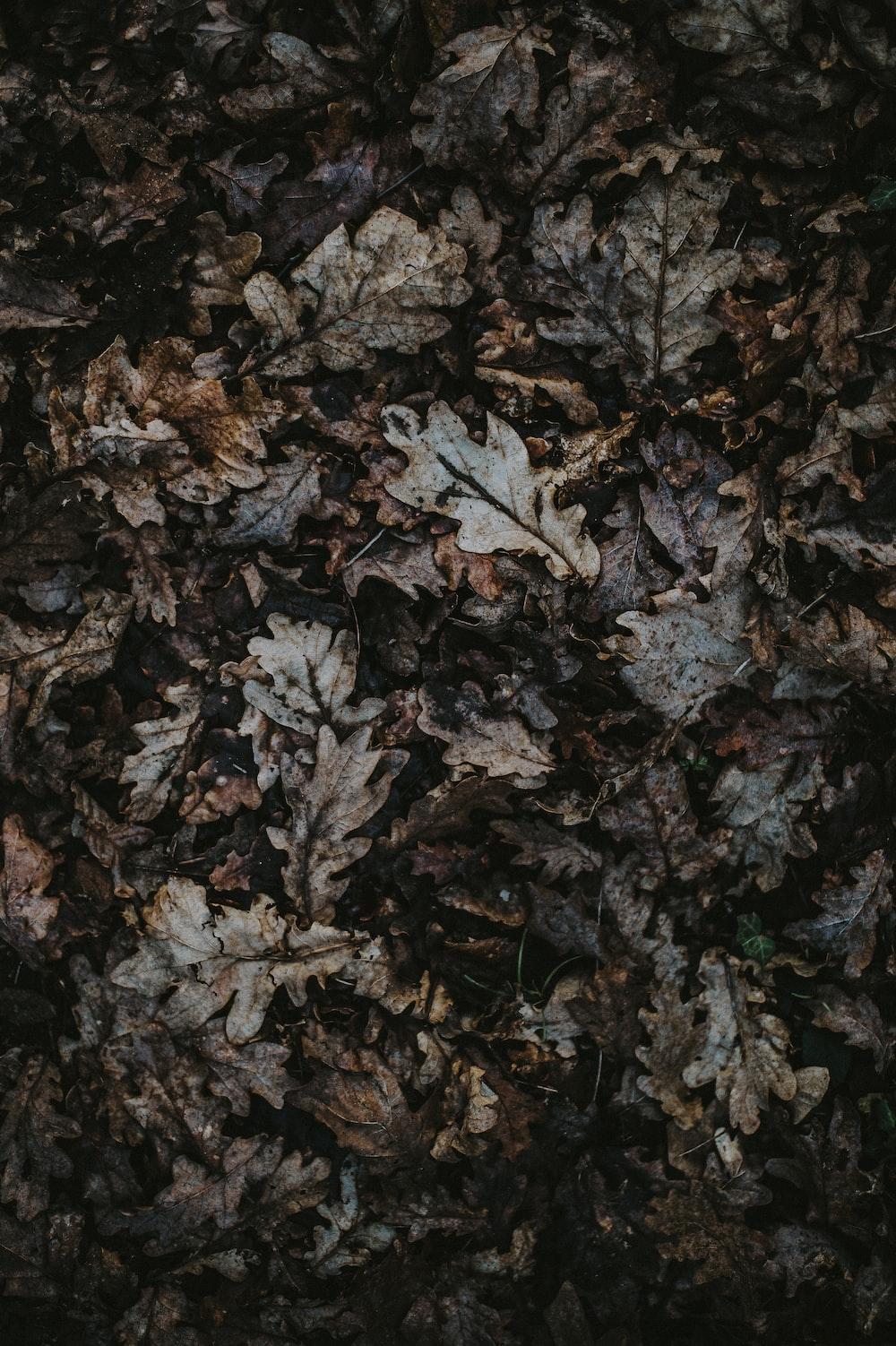 gray leaf lot