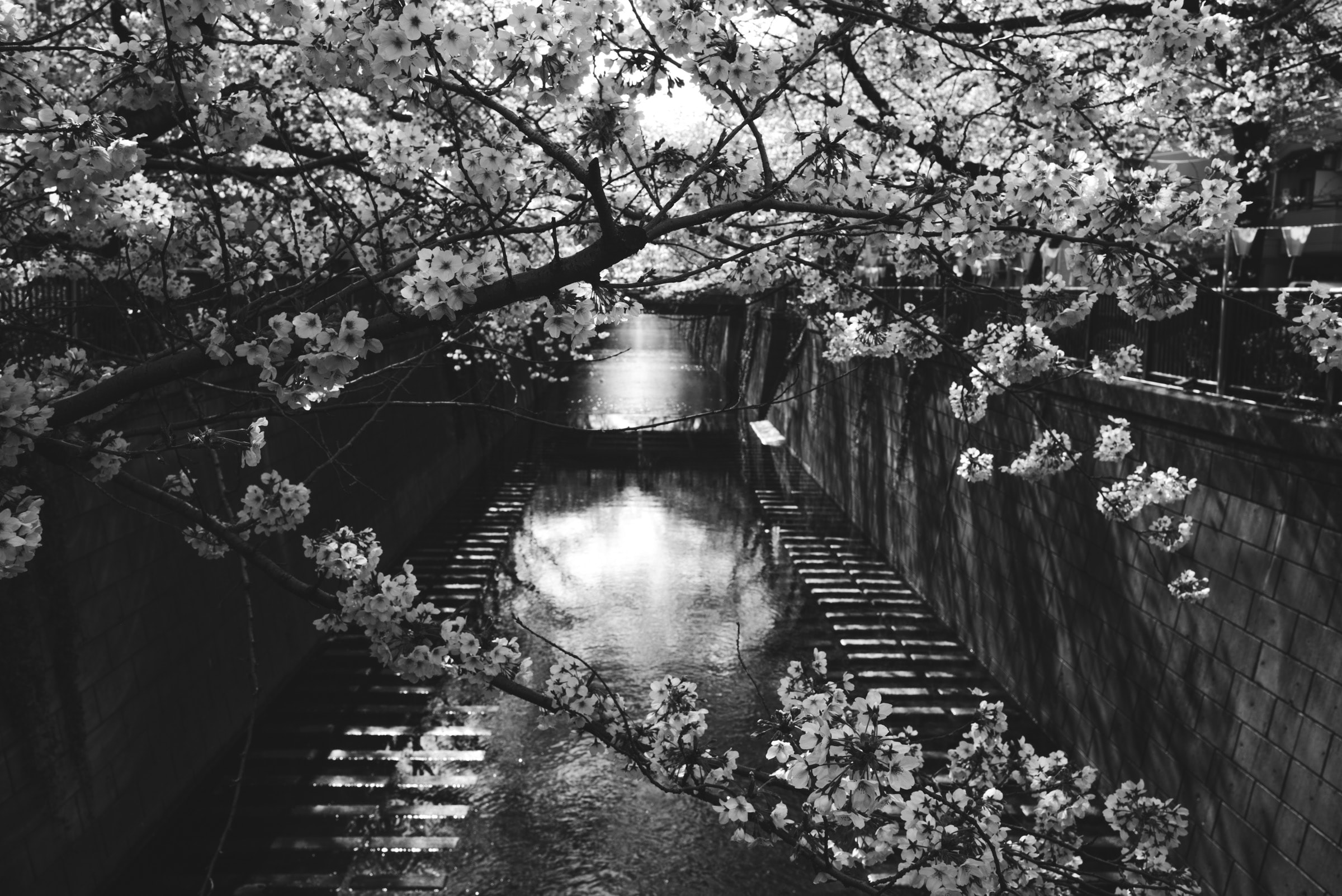 grayscale photography of water under trees