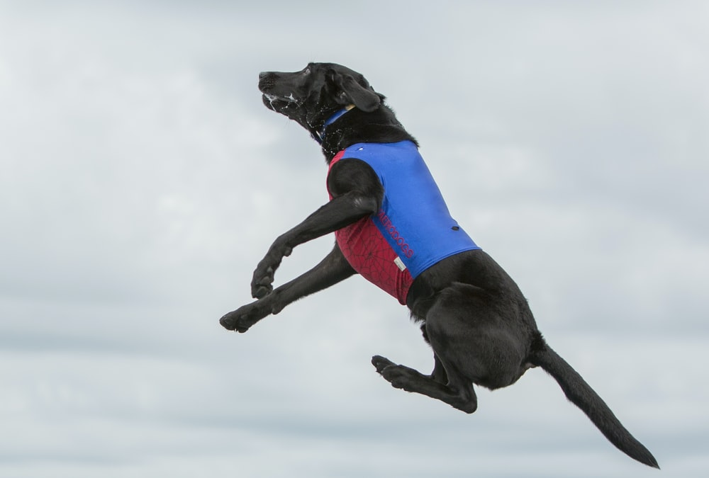 black dog on air