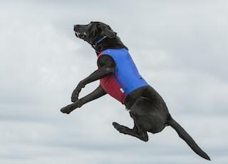black dog on air