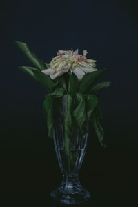 white and pink flowering green leaf plant centerpiece
