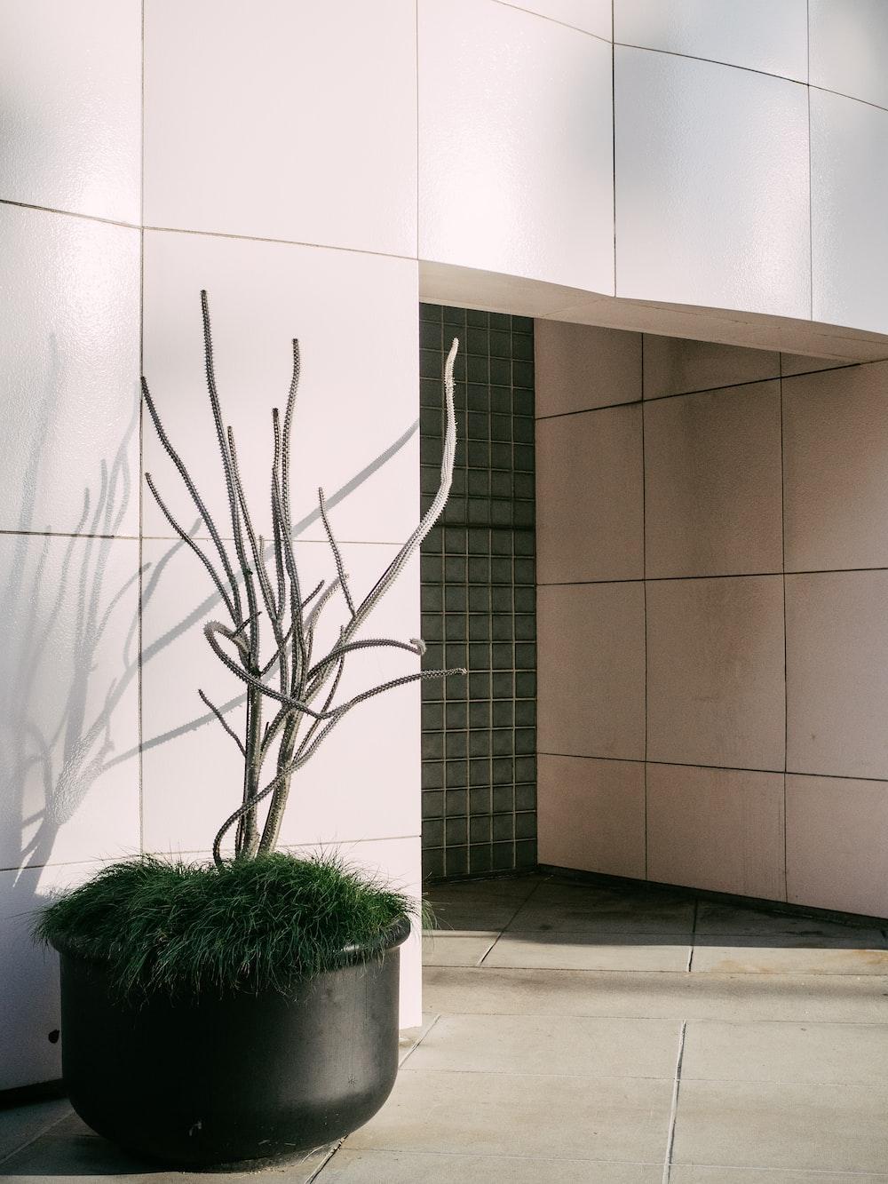 gray plant decor outside building