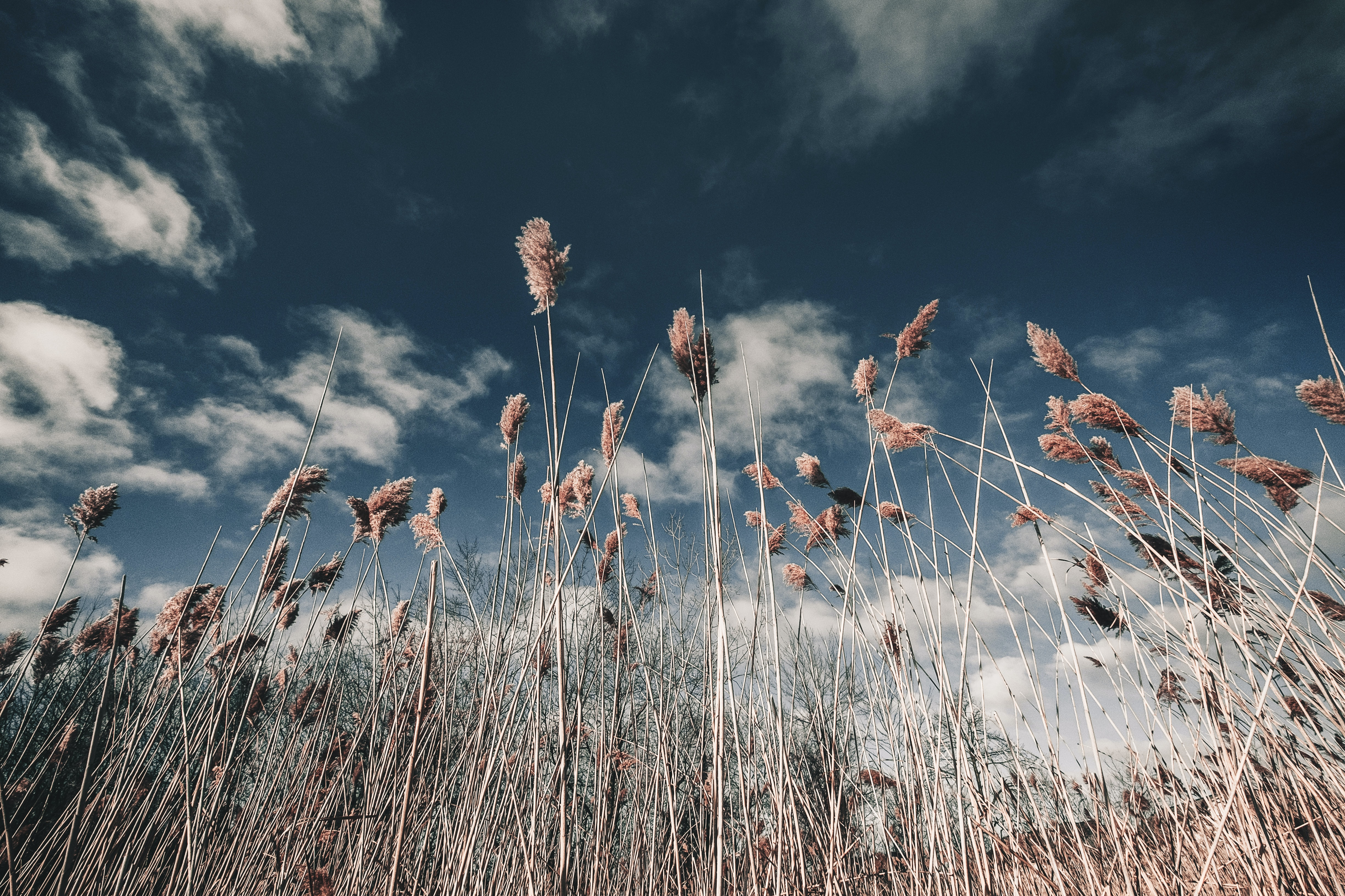 brown grasses with flowers under white clouds at daytime low angle photography