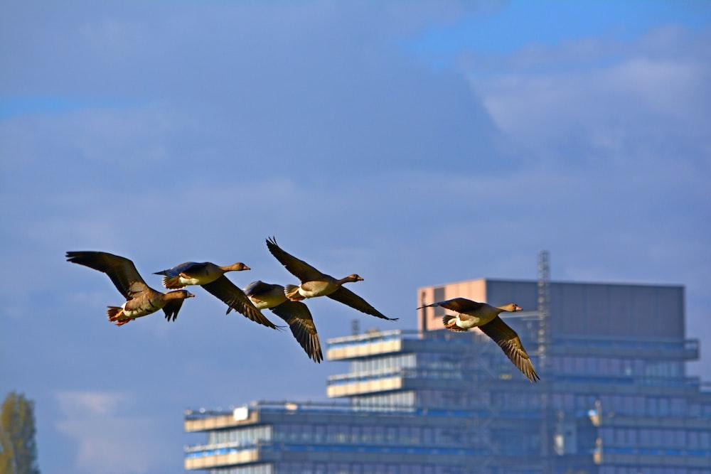 four soaring black birds
