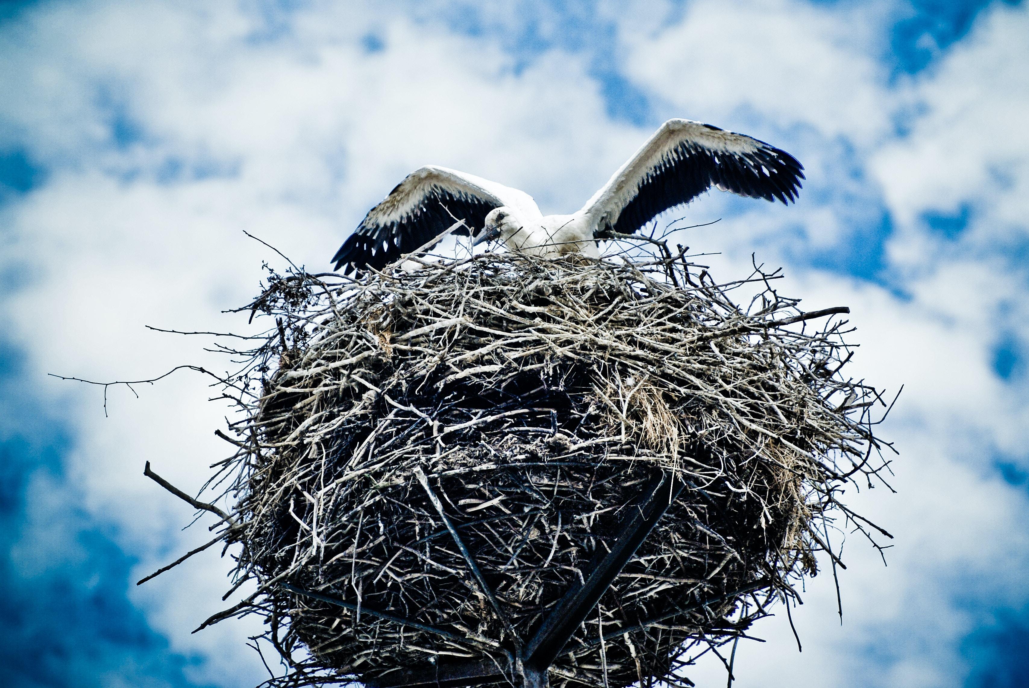 white and gray bird on nest