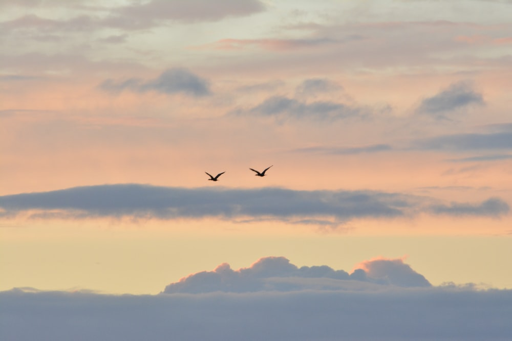 two birds flying on sky at daytime