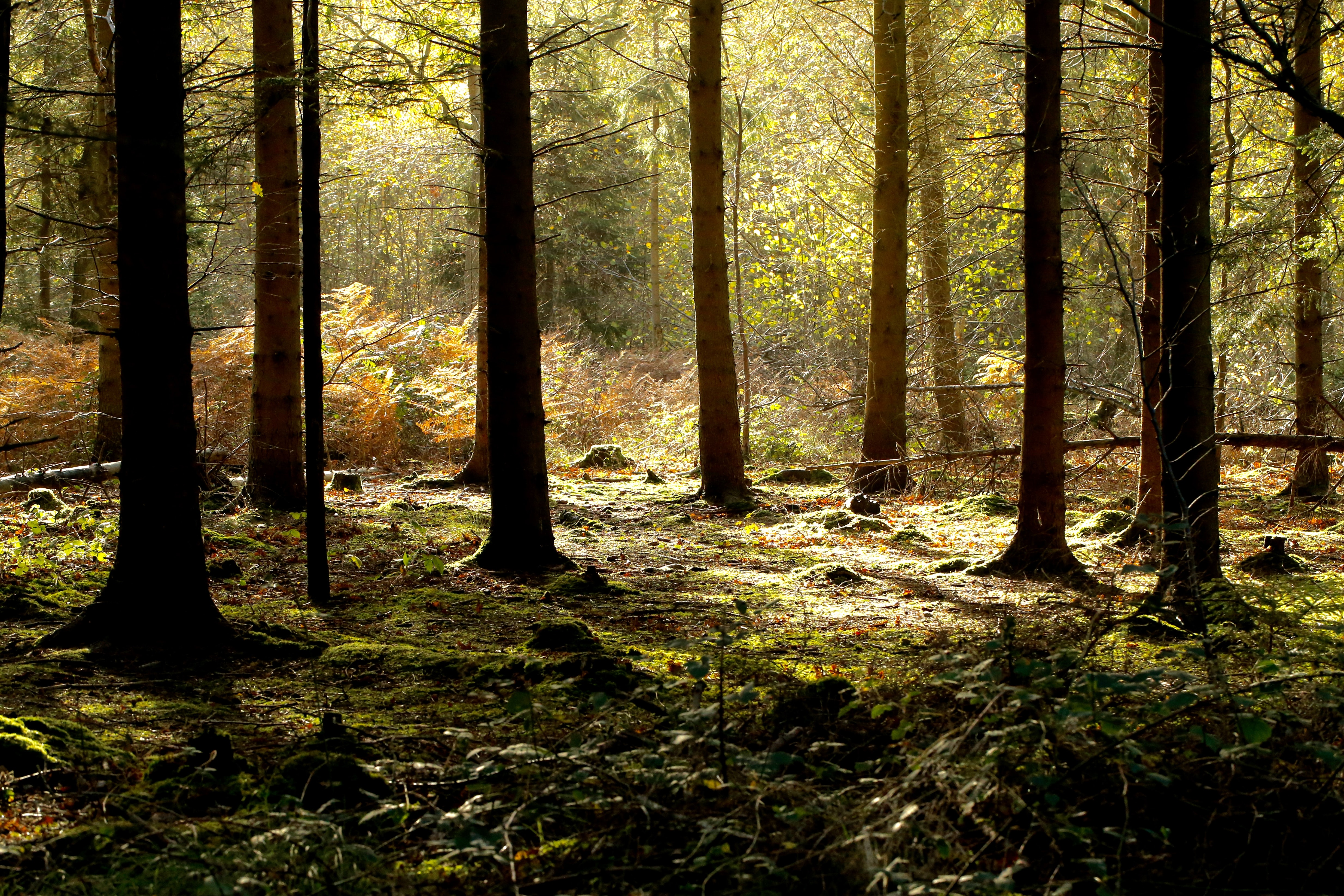green and brown forest at daytime