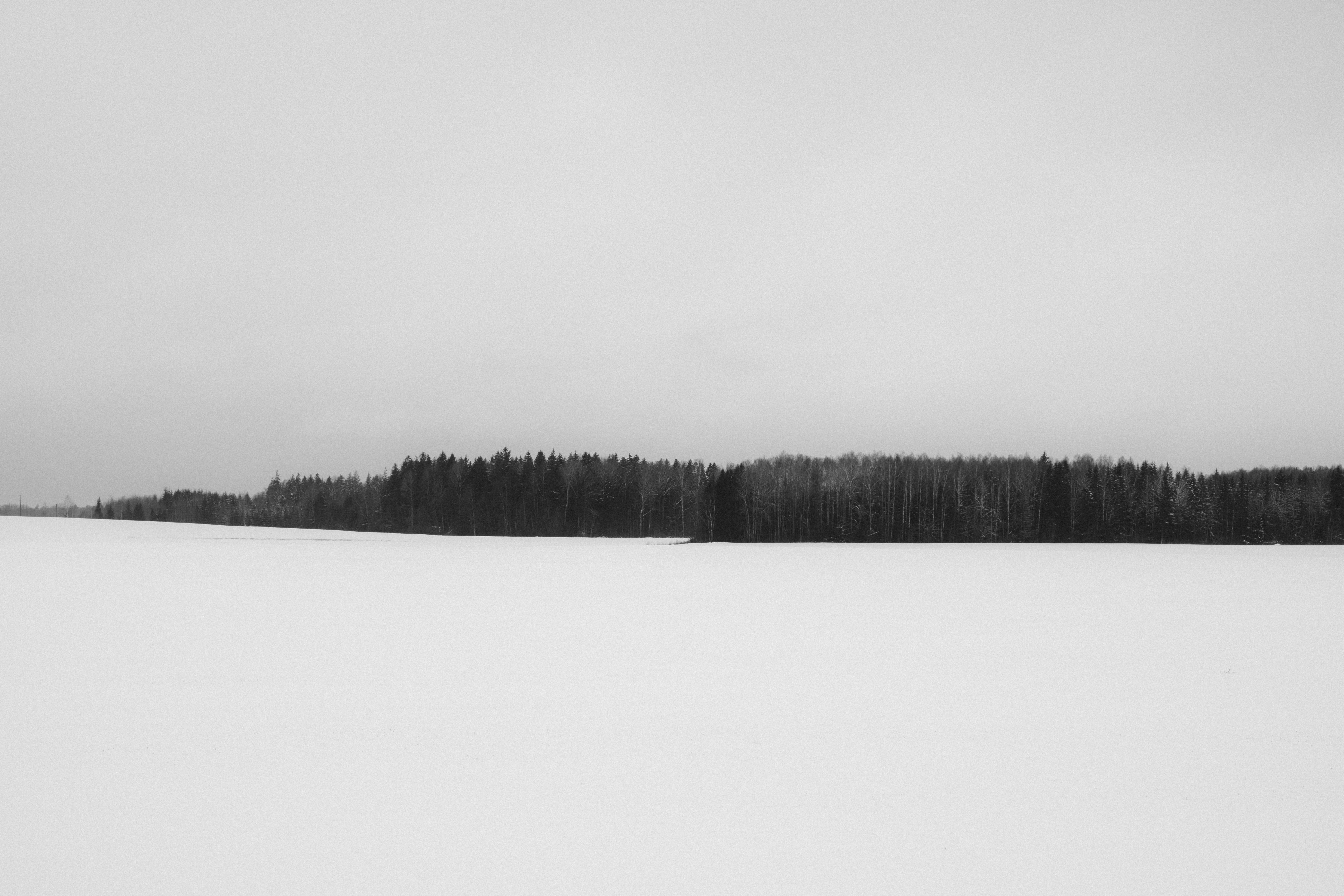 forest grayscale photography