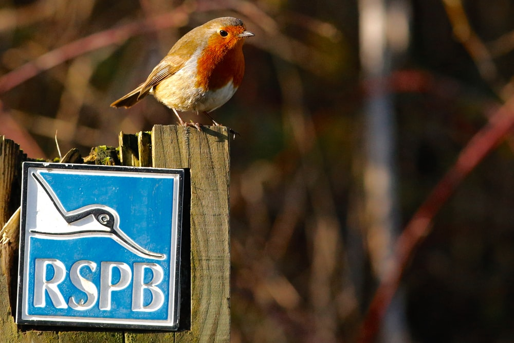 shallow focus photography of red and brown bird