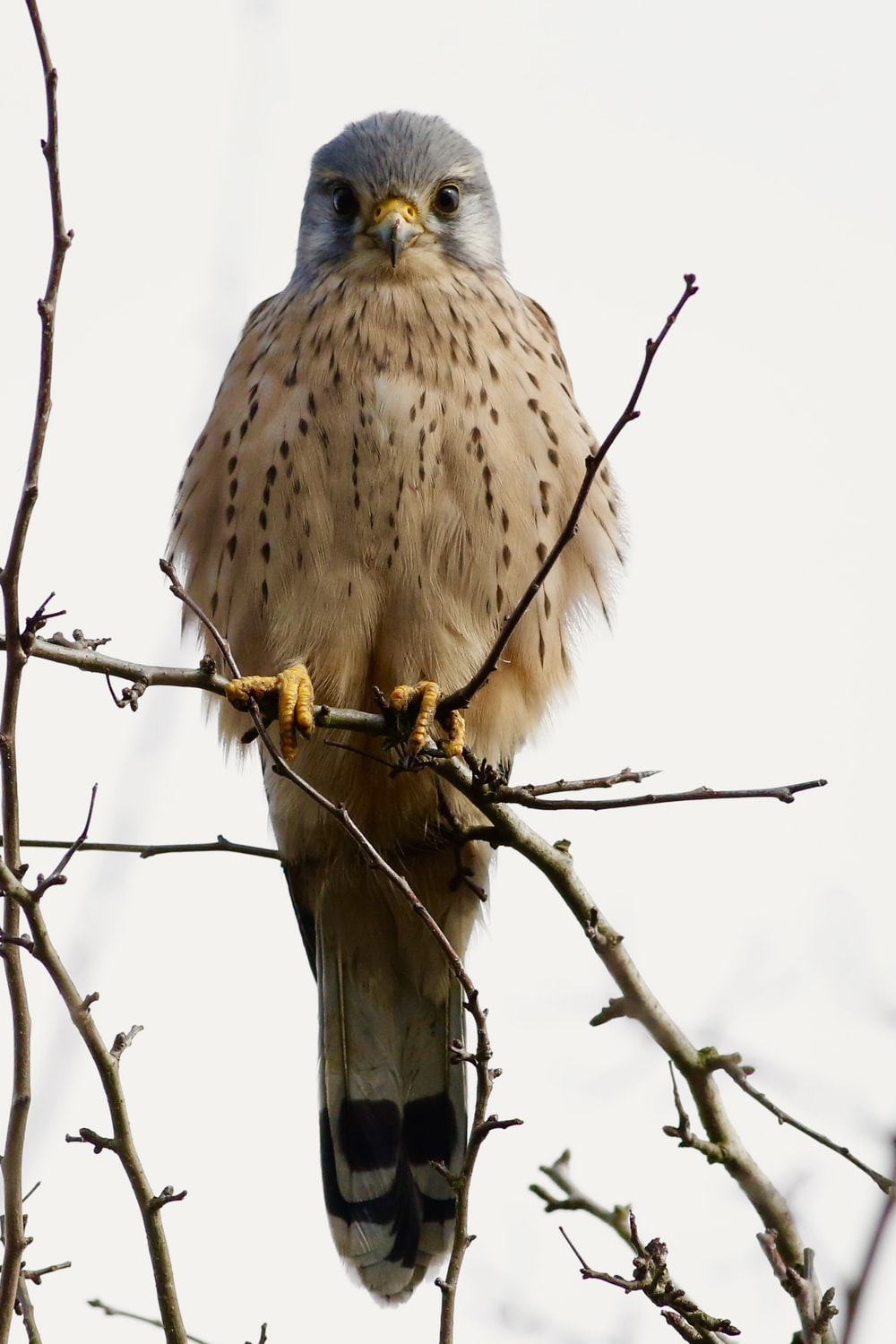 white, gray, black, and brown bird on brown tree branch over cloudy sky at daytime