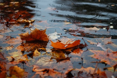 autumn leaves on body of water rain teams background