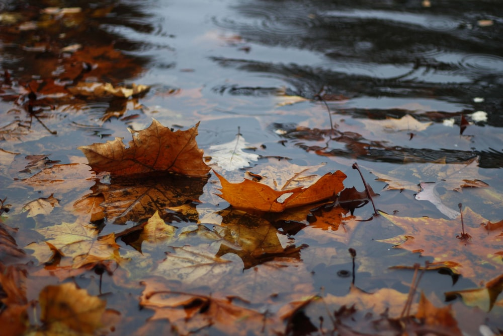 autumn leaves on body of water