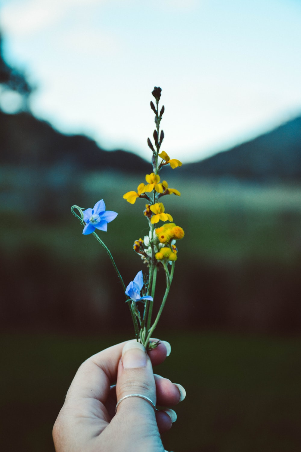 person holding yellow and blue petaled flowers