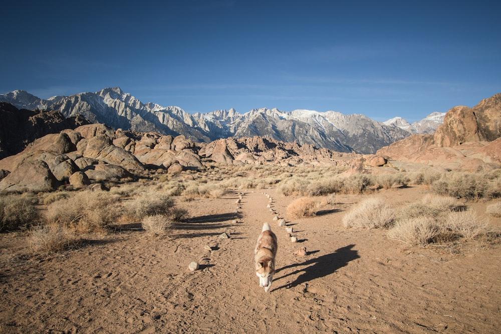 brown animal walking on dirt field
