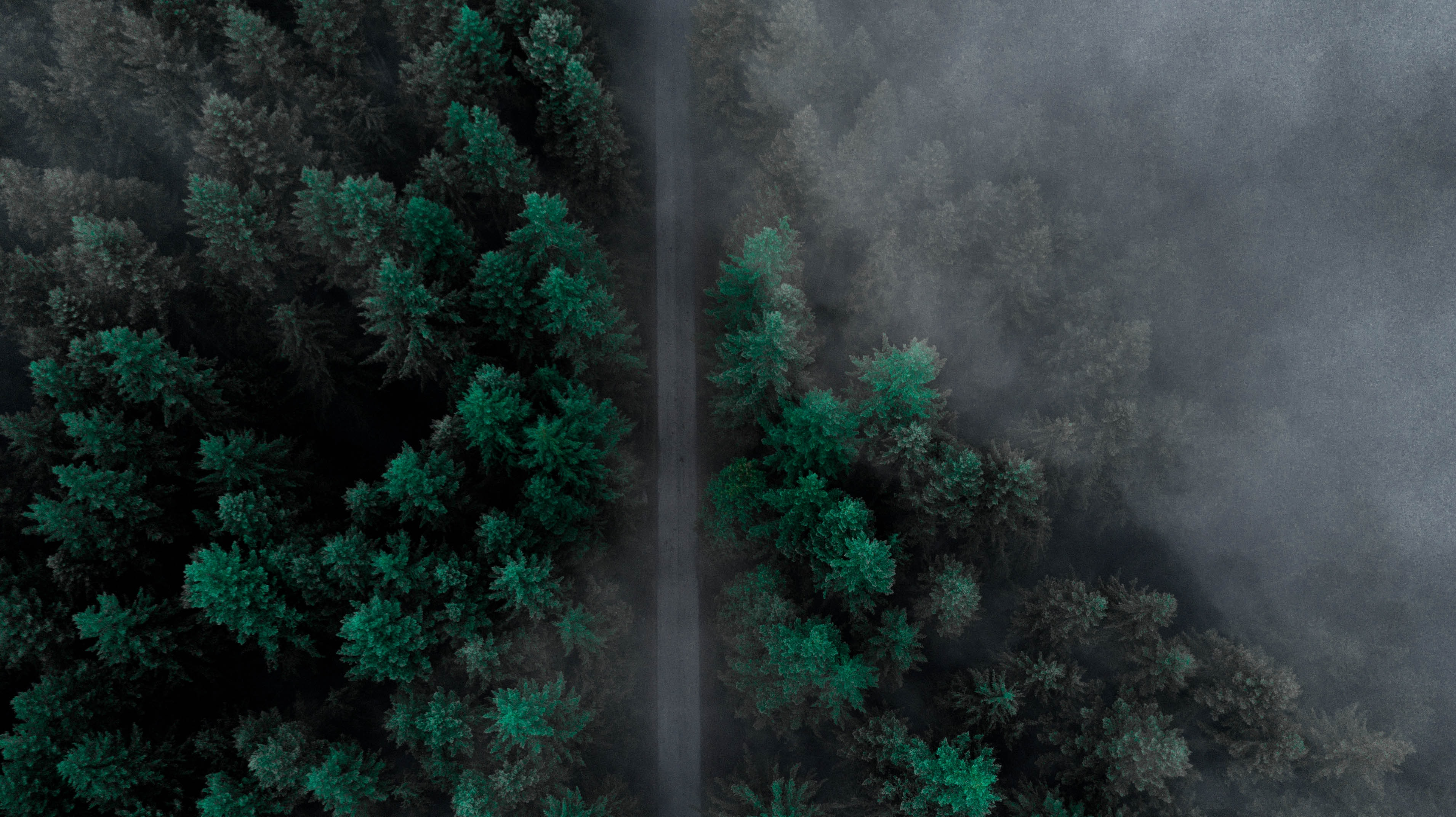 aerial photo of road surrounded by trees during daytime