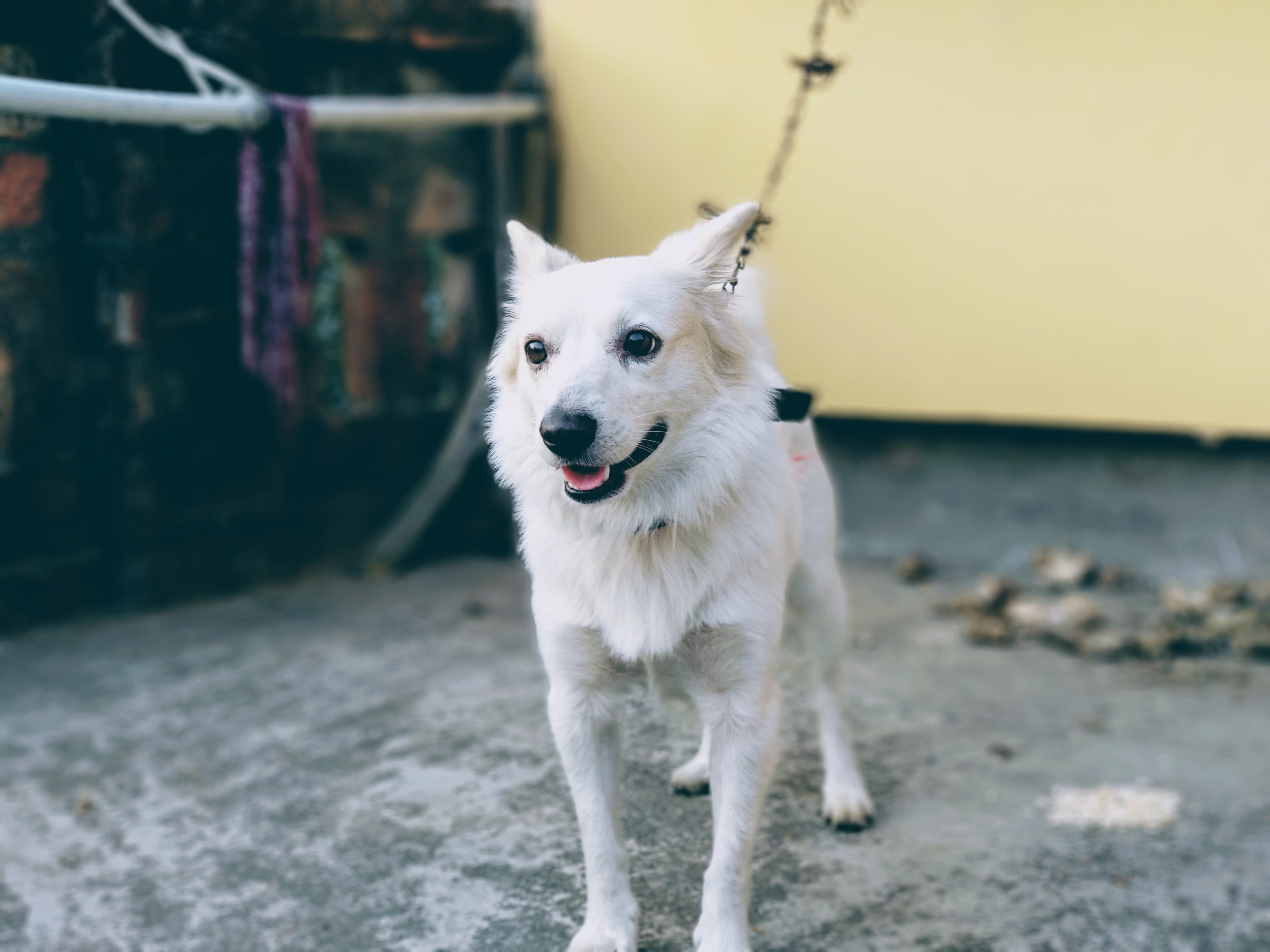 shallow focus photo of short-coated white dog