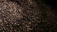coffee grain lot