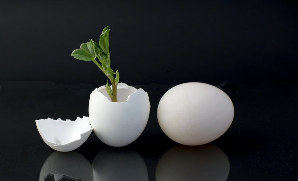 egg shell with green leaf plant