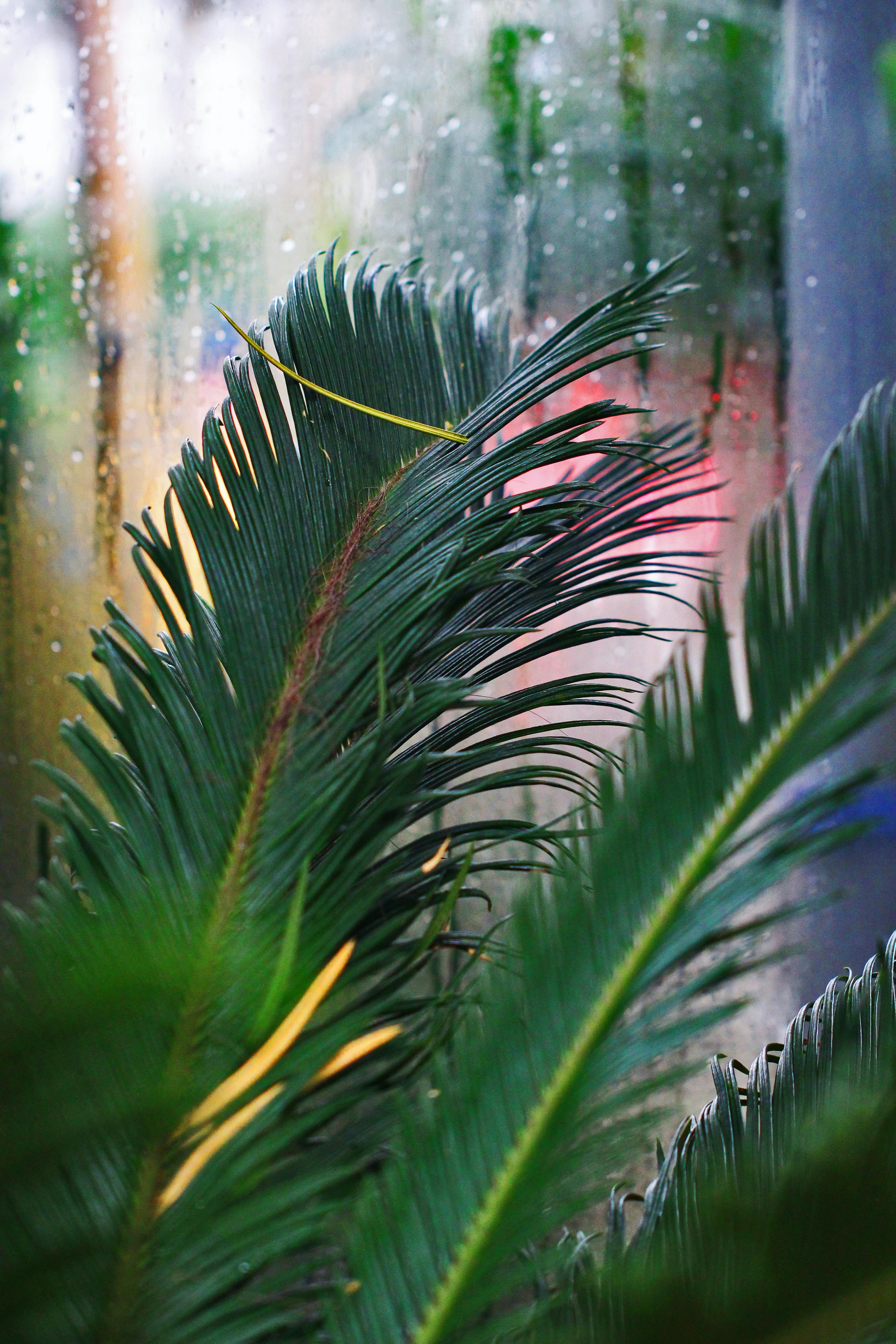 green sago palm tree closeup photography