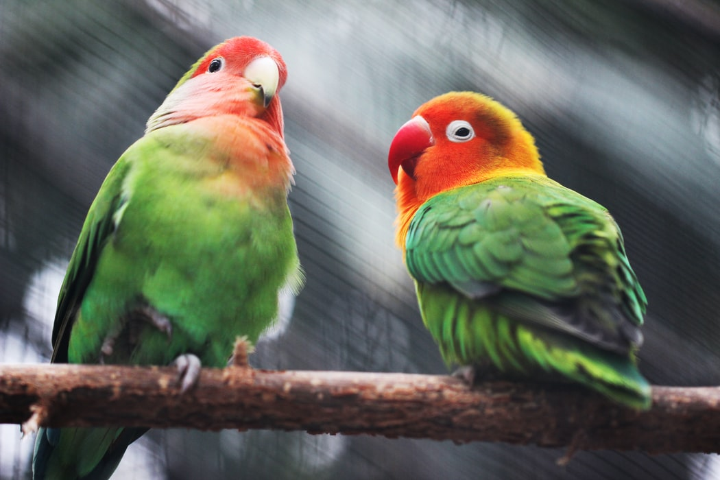 Parrots at Jurong Bird Park