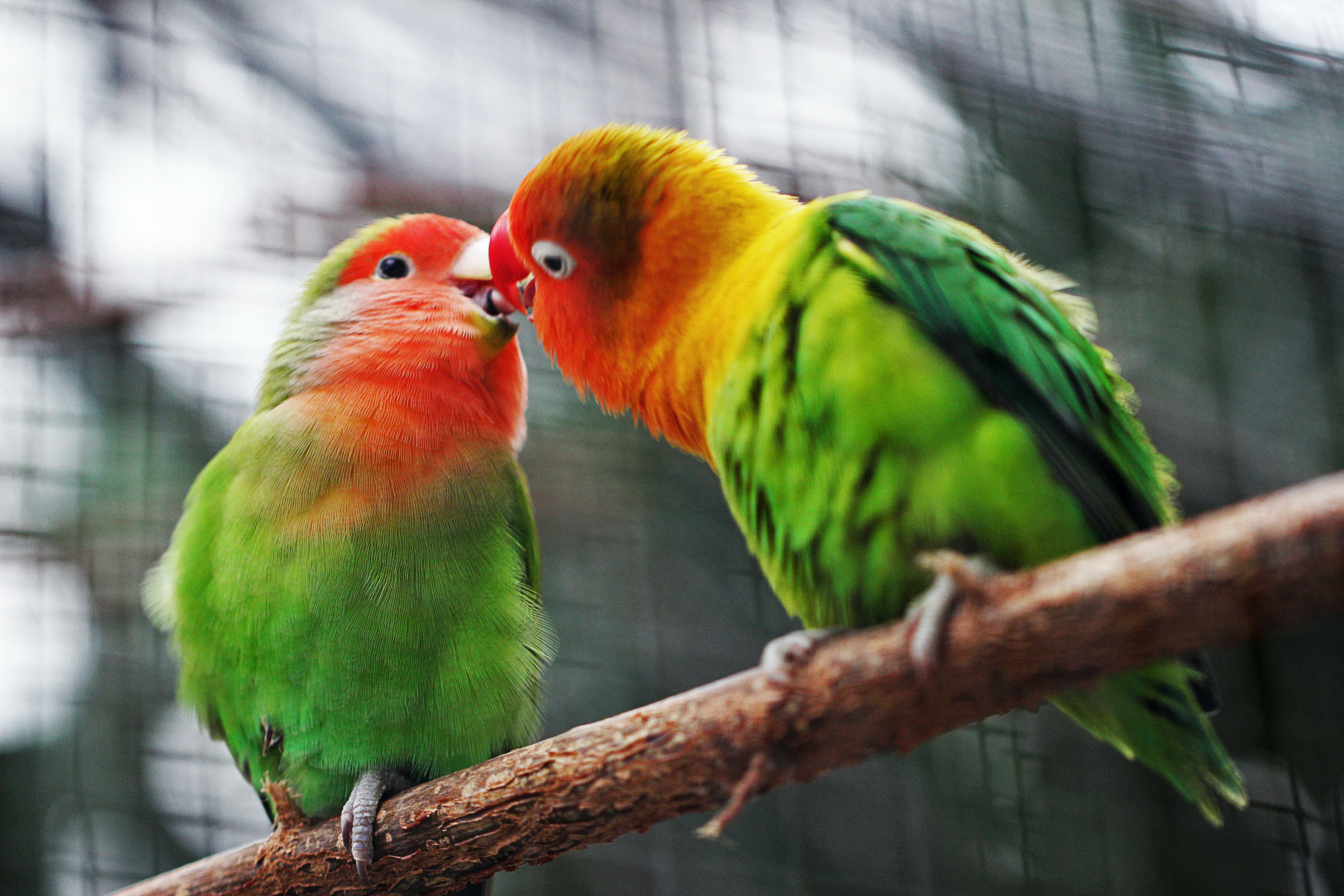 two birds on branch