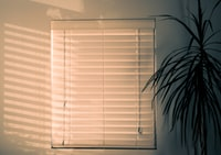 white closed window blind near green leaf plant inside room