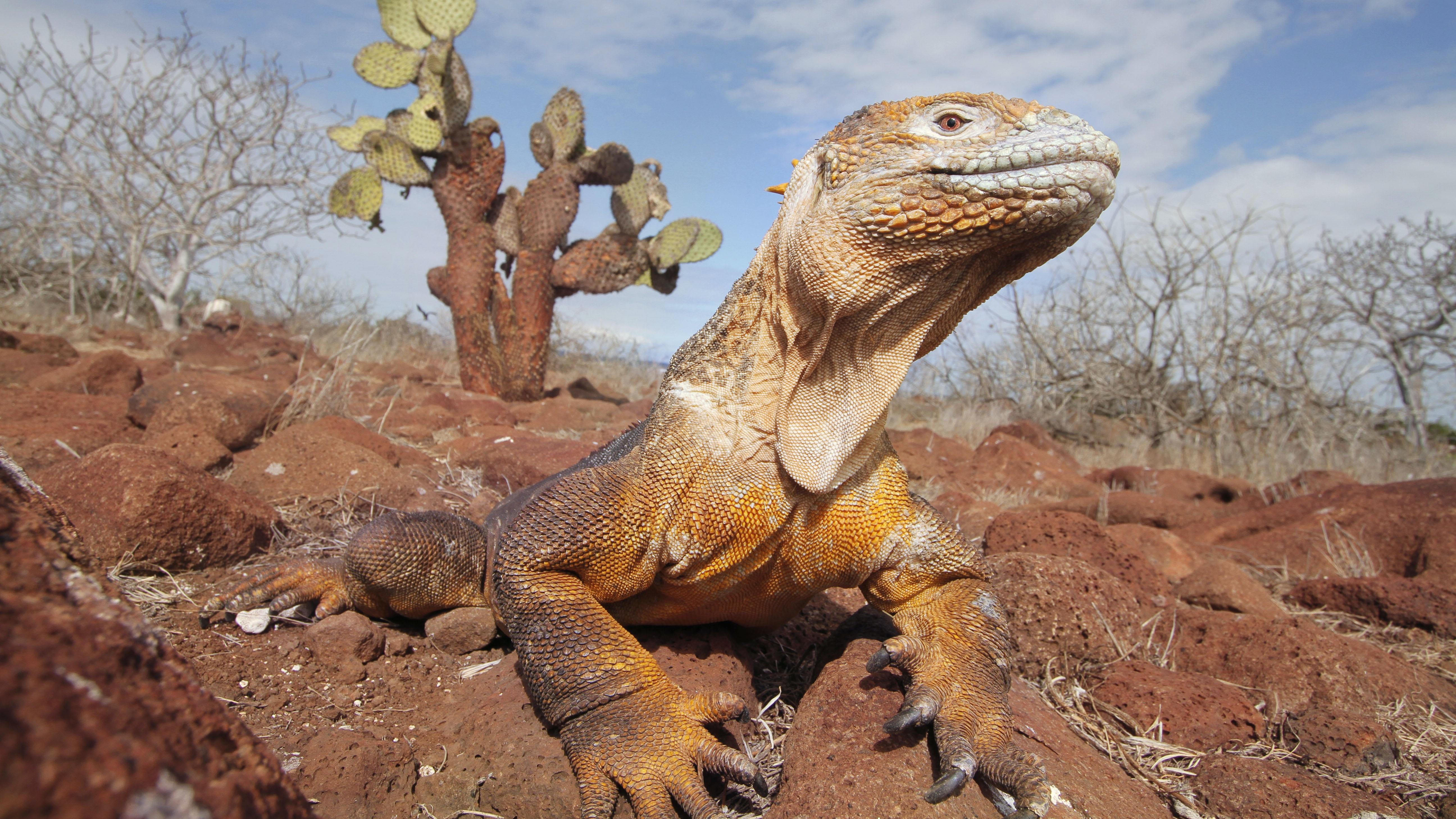 brown komodo dragon on pile of dirt