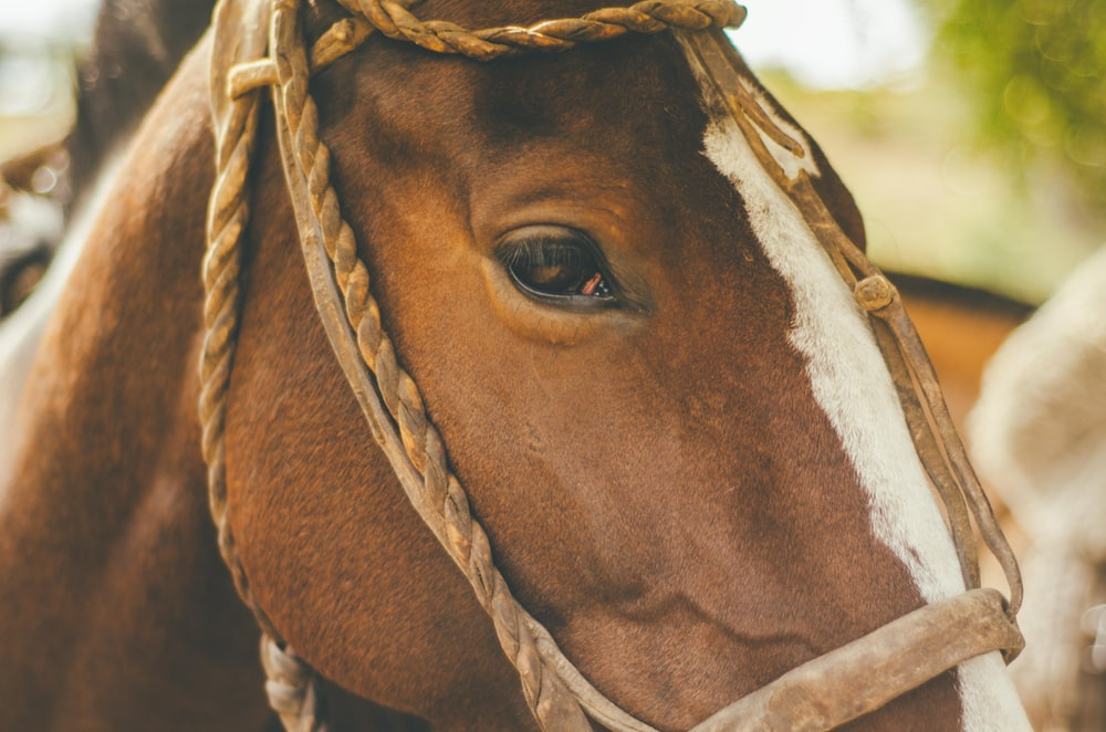 closeup photography of brown horse at daytime