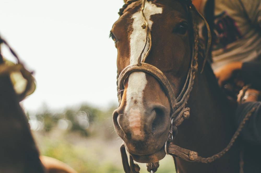 shallow focus photography of brown horse